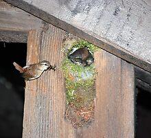 birds feeding by smiler