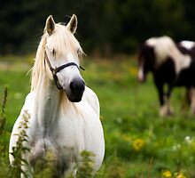 Horse by Stojs