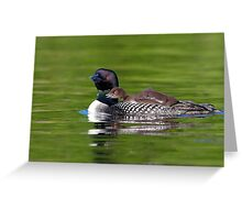 Bucky! - Common Loon Greeting Card