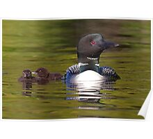 Looniage - Common Loon Poster