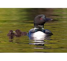 Looniage - Common Loon Photographic Print