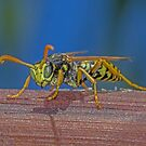 Wasp with focus by Rick Playle