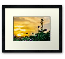 A Prickly Sunset Framed Print