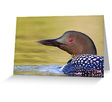 Closeup Common Loon Greeting Card