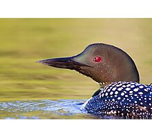 Closeup Common Loon Photographic Print