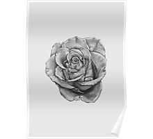 Black And Grey Rose Poster