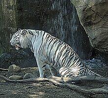 White Tiger by Marya Humble