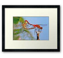 The Trapeze Artists ! Framed Print