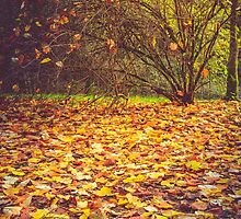 Autumn leaves and shrub by 7horses