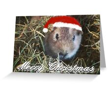 Guinea Pig Christmas Card No. 1 Greeting Card