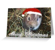 Guinea Pig Christmas Card No. 1 Greeting Card