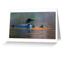Spotlight - Common Loon Greeting Card