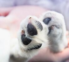 Puppy paws in pastel colours by ladyrh