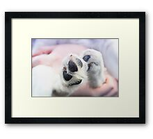 Puppy paws in pastel colours Framed Print