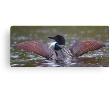 Loon Stretch - Common Loon Canvas Print