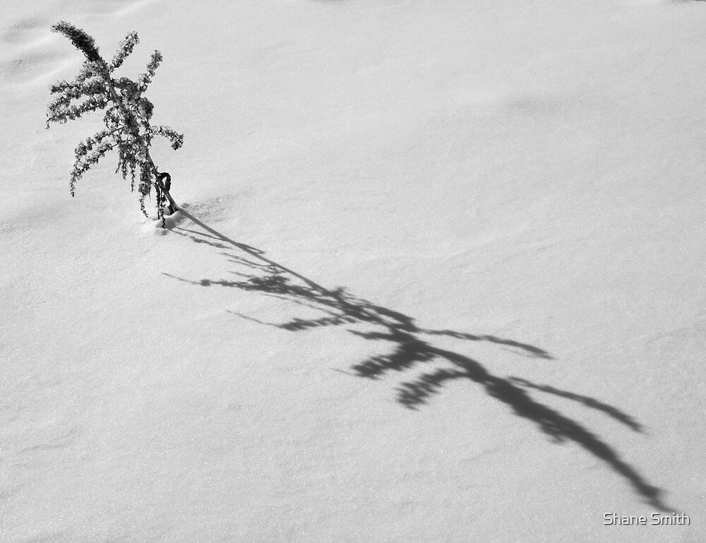 Snow Shadow by Shane Smith