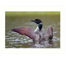 Common Loon - Buck Lake, Ontario Art Print