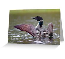 Common Loon - Buck Lake, Ontario Greeting Card
