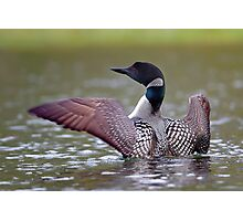 Common Loon - Buck Lake, Ontario Photographic Print