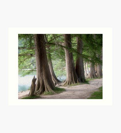 Yesterday's Trees Art Print