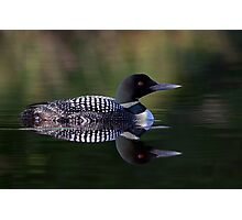 Reflective Loon - Common Loon Photographic Print