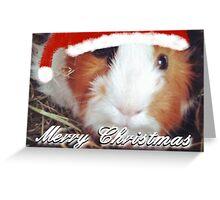 Guinea Pig Christmas Card No. 2 Greeting Card