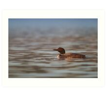 Common Loon - Wilson Lake Art Print