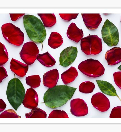 Wilted red rose petals and leaves on a white background Sticker