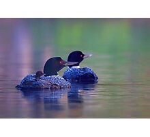 Morning outing - Common loon Photographic Print