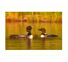 Common loon family portrait Art Print
