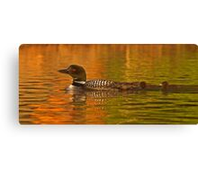 Follow the leader - Common loon Canvas Print