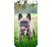 Cute French bulldog puppy, dog iPhone Case/Skin