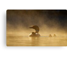 Loons in the mist Canvas Print