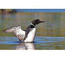 Common loon spray Photographic Print