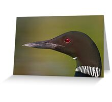Common Loon profile Greeting Card