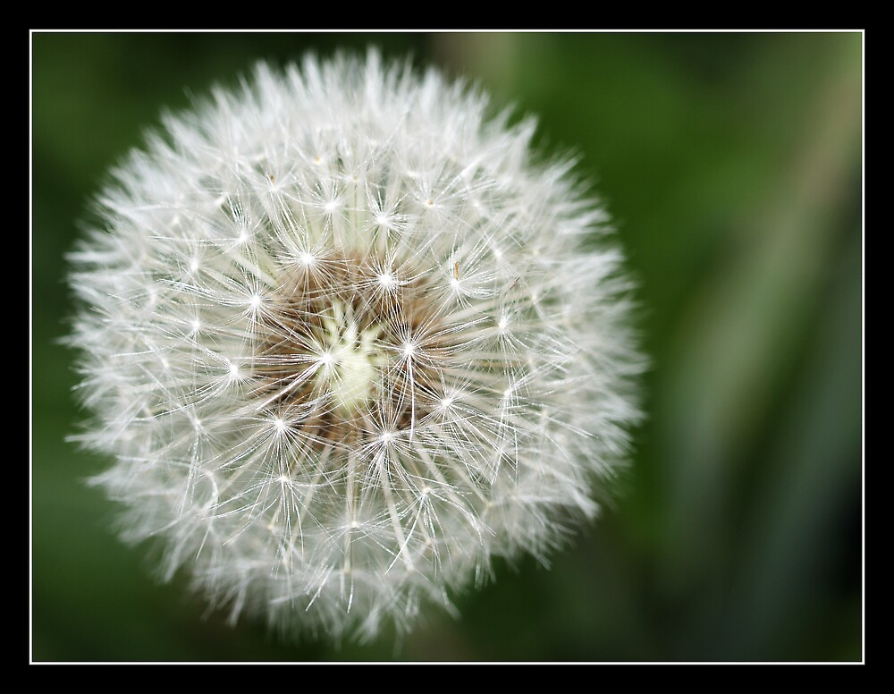 Delicate Wish by Jenni77