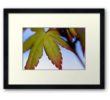 Maple Beginnings Framed Print