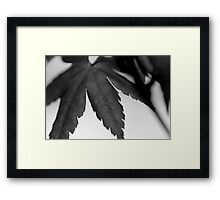 B&W Beginnings Framed Print