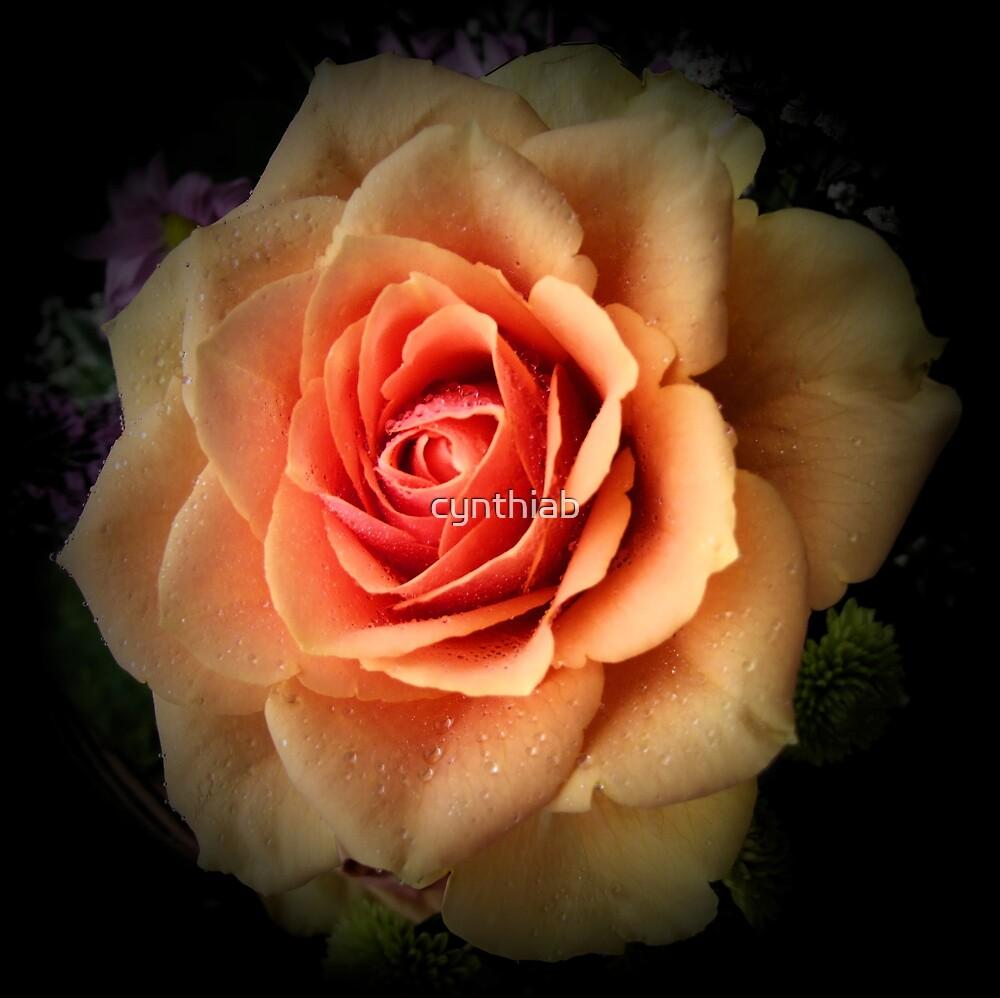 pale orange rose by cynthiab