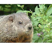 Ground Hog Day! Photographic Print