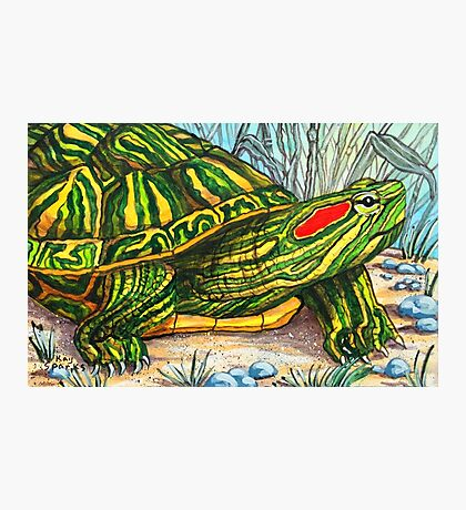 The Red Eared Slider Photographic Print