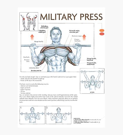 Military Press - Exercise Muscle Diagram Photographic Print