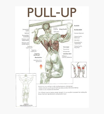 Pull-Up - Exercise Muscle Diagram Photographic Print