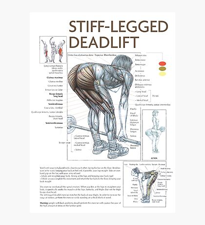 Stiff-Legged Deadlift - Exercise Muscle Diagram Photographic Print