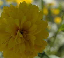 Yellow Petals by Janice Hopkins