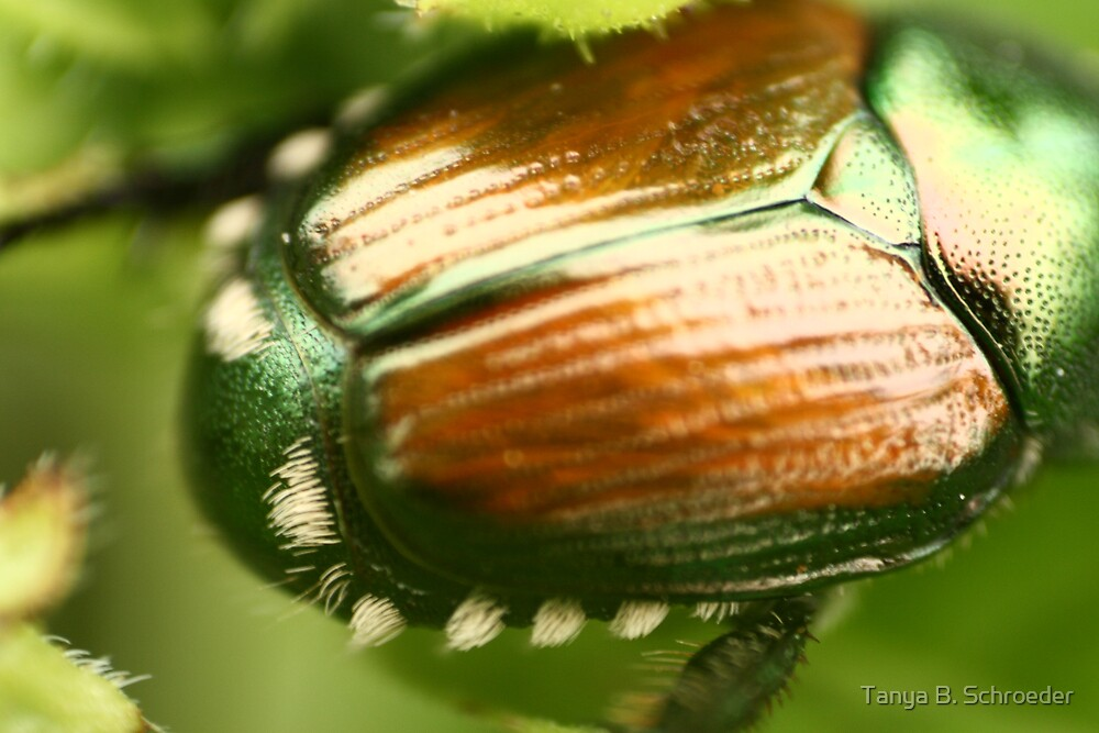 Beetle Bum by Tanya B. Schroeder