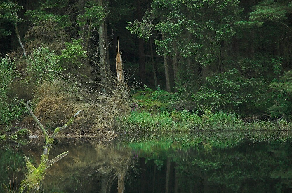 Dark Forest by Glenn Mason
