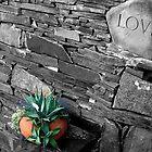 Love by Kodak