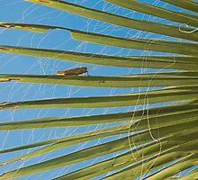 Locust by Glenn Mason
