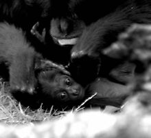 PLAY DATE by TANYA WILLIAMS